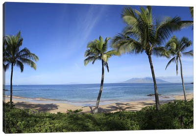 Palm Tree Lined Beach, Maui, Hawaii, USA Canvas Art Print