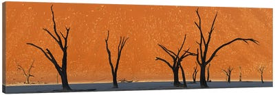 Dead trees by red sand dunes, Dead Vlei, Namib-Naukluft National Park, Namibia Canvas Print #PIM9276
