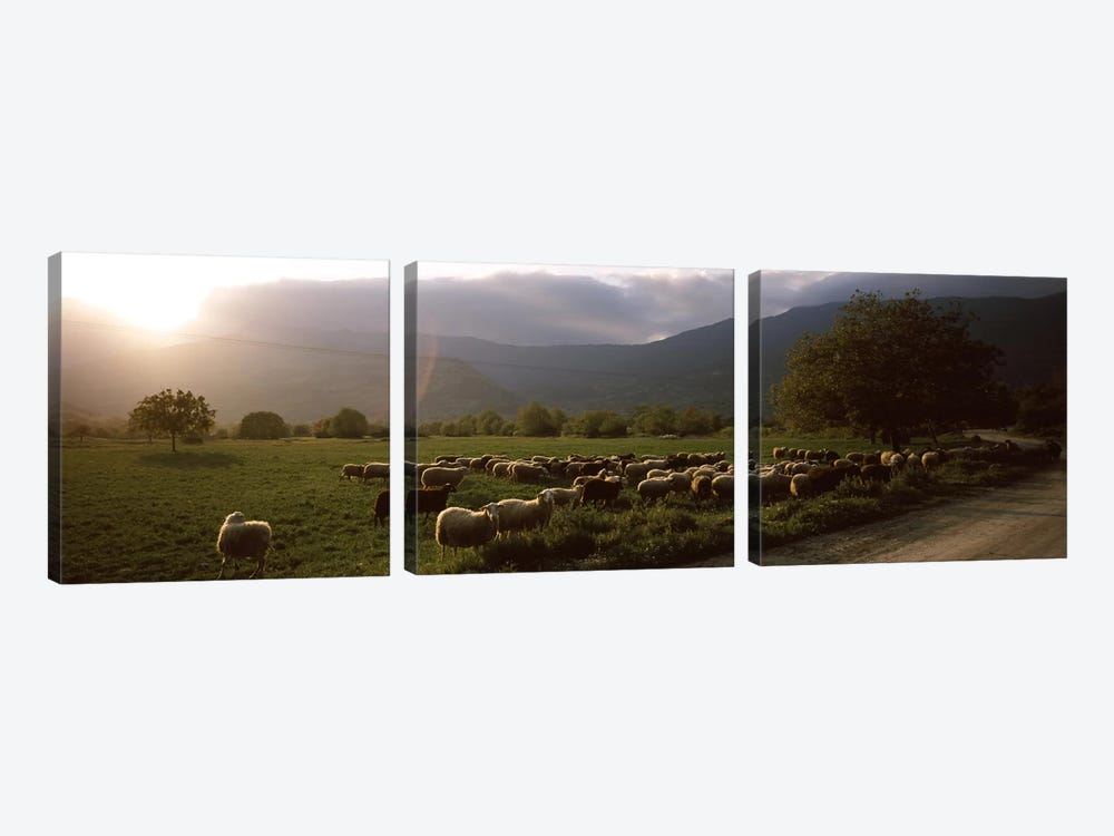 Flock of sheep grazing in a field, Feneos, Corinthia, Peloponnese, Greece by Panoramic Images 3-piece Canvas Wall Art