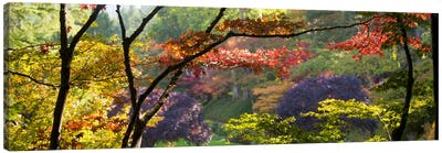 Autumn Landscape, Butchart Gardens, Brentwood Bay, Vancouver Island, British Columbia, Canada Canvas Art Print