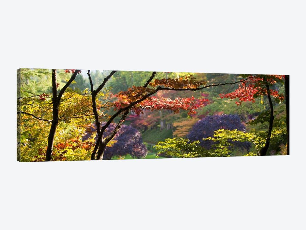 Autumn Landscape, Butchart Gardens, Brentwood Bay, Vancouver Island, British Columbia, Canada by Panoramic Images 1-piece Canvas Wall Art