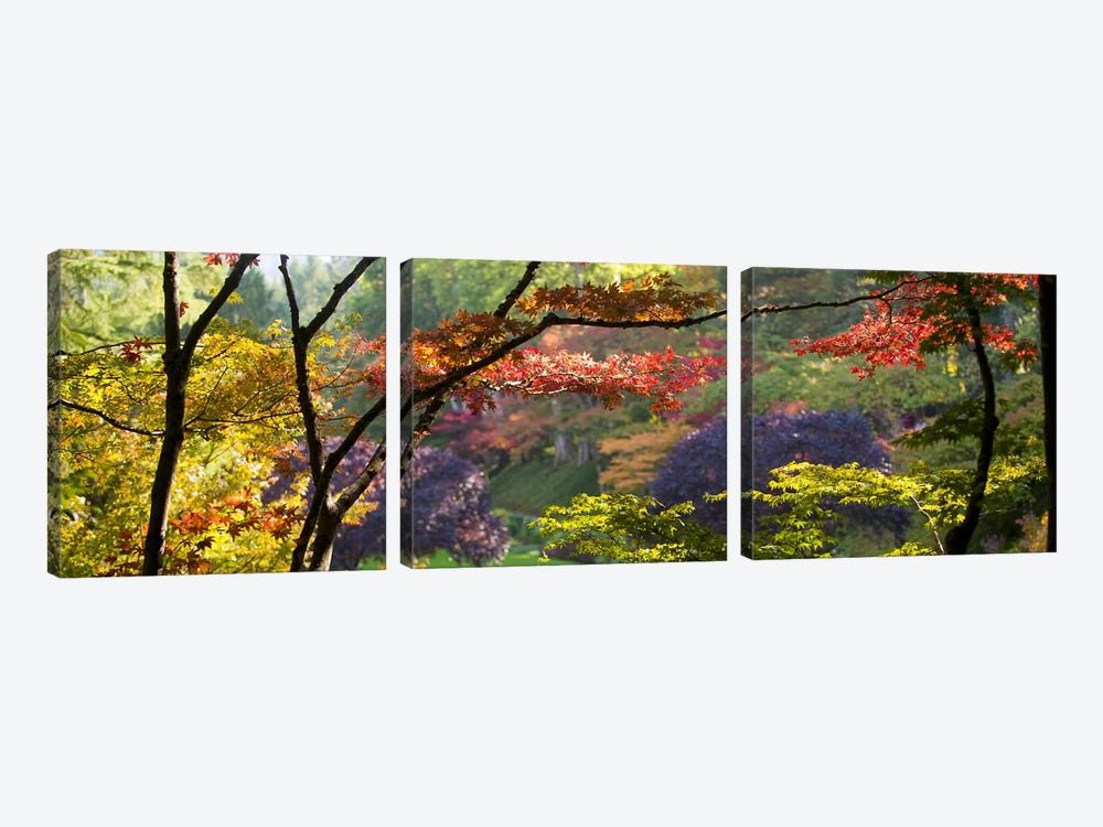 Autumn Landscape, Butchart Gardens, Brentwood Bay, Vancouver Island, British Columbia, Canada by Panoramic Images 3-piece Canvas Wall Art