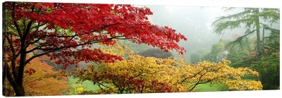 Autumn Landscape II, Butchart Gardens, Brentwood Bay, Vancouver Island, British Columbia, Canada Canvas Art Print