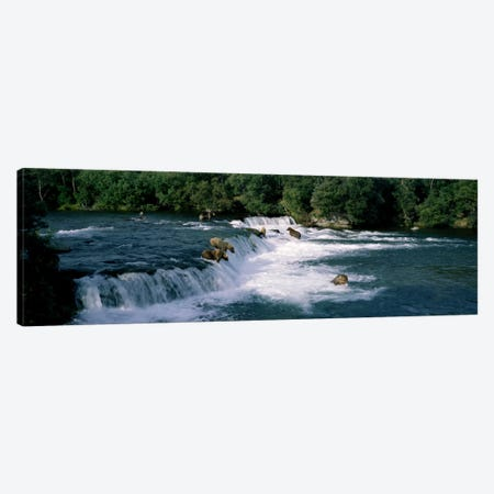 Bears fish Brooks Fall Katmai AK Canvas Print #PIM932} by Panoramic Images Canvas Artwork