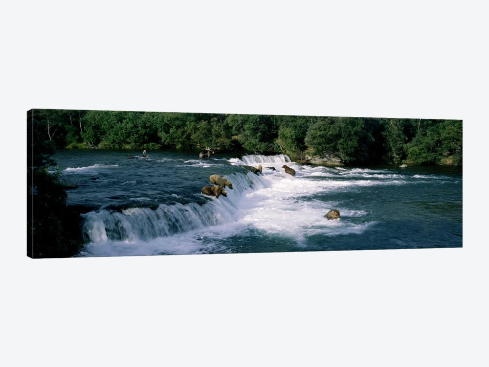 Bears fish Brooks Fall Katmai AK by Panoramic Images 1-piece Art Print