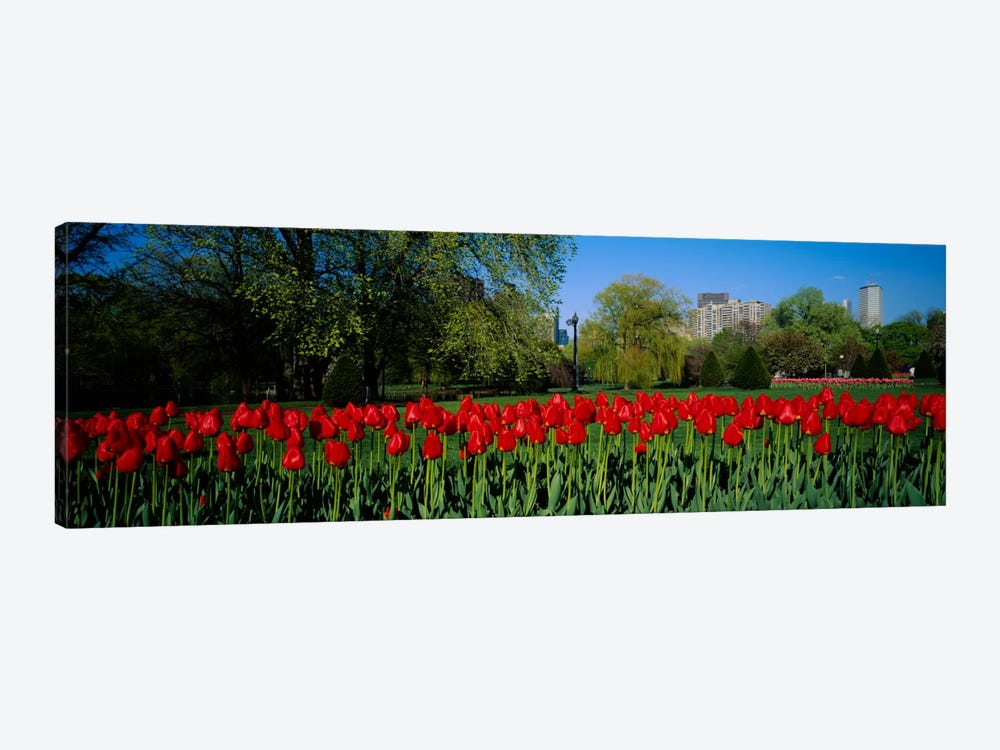 Tulips in a gardenBoston Public Garden, Boston, Massachusetts, USA by Panoramic Images 1-piece Canvas Artwork
