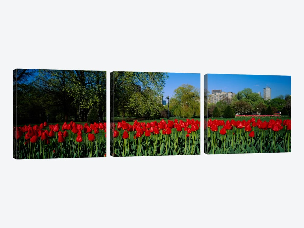 Tulips in a gardenBoston Public Garden, Boston, Massachusetts, USA by Panoramic Images 3-piece Canvas Wall Art