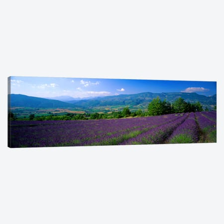 Lavender Field, Drome, Auvergne,Rhone-Alpes, France Canvas Print #PIM948} by Panoramic Images Art Print