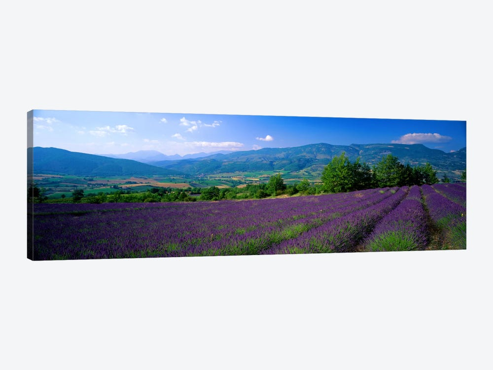 Lavender Field, Drome, Auvergne,Rhone-Alpes, France by Panoramic Images 1-piece Canvas Wall Art
