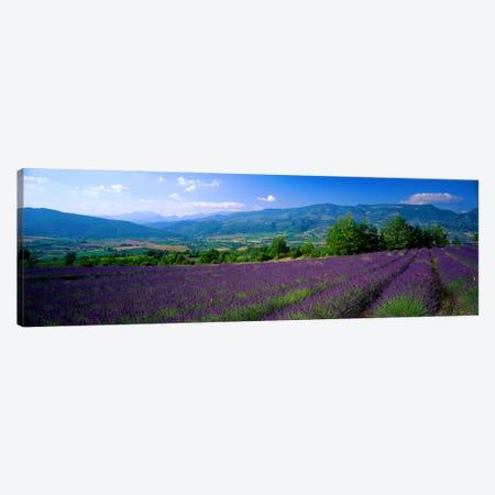 Lavender Field, Drome, Auvergne,Rhone-Alpes, France Canvas Print #PIM948} by Panoramic Images Art Print
