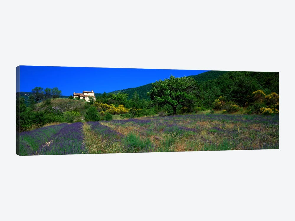 Lavender Field La Drome Provence France by Panoramic Images 1-piece Canvas Print