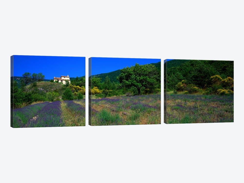 Lavender Field La Drome Provence France by Panoramic Images 3-piece Canvas Art Print