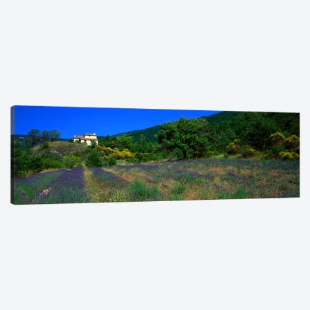 Lavender Field La Drome Provence France Canvas Print #PIM949} by Panoramic Images Art Print