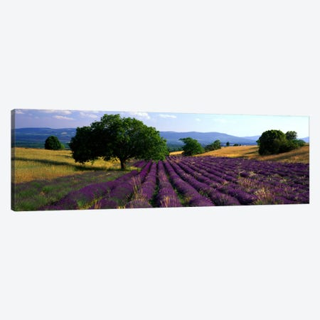 Countryside Landscape, Drome, Auvergne-Rhone-Alpes, France Canvas Print #PIM950} by Panoramic Images Canvas Art