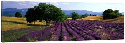 Countryside Landscape, Drome, Auvergne-Rhone-Alpes, France Canvas Print #PIM950
