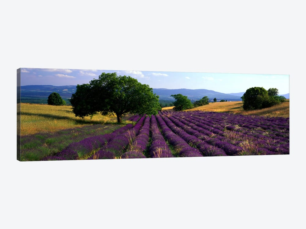 Countryside Landscape, Drome, Auvergne-Rhone-Alpes, France 1-piece Canvas Art Print