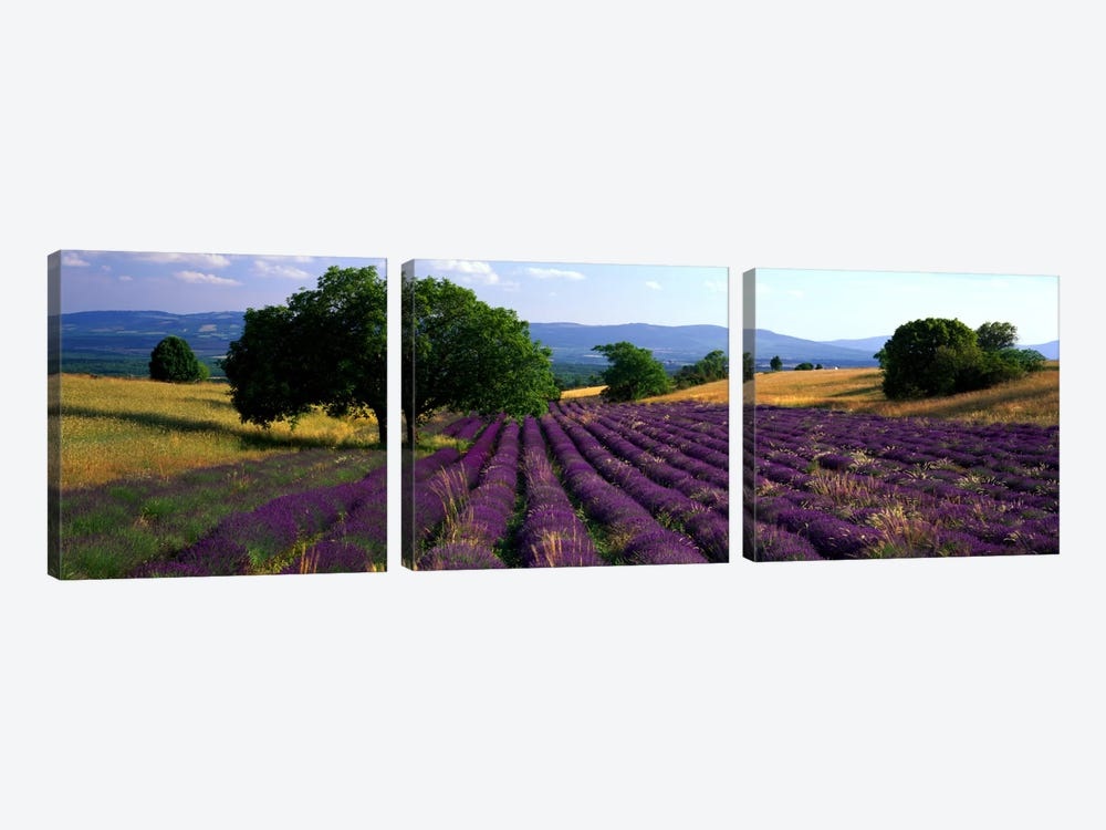 Countryside Landscape, Drome, Auvergne-Rhone-Alpes, France by Panoramic Images 3-piece Art Print