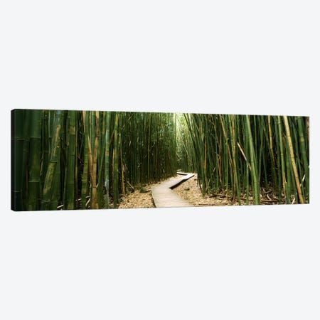 Bamboo Forest, Ohe'o Gulch, Haleakala National Park, Hana, Maui, Hawaii, USA Canvas Print #PIM9572} by Panoramic Images Canvas Wall Art