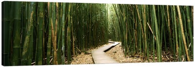 Bamboo Forest, Ohe'o Gulch, Haleakala National Park, Hana, Maui, Hawaii, USA Canvas Art Print