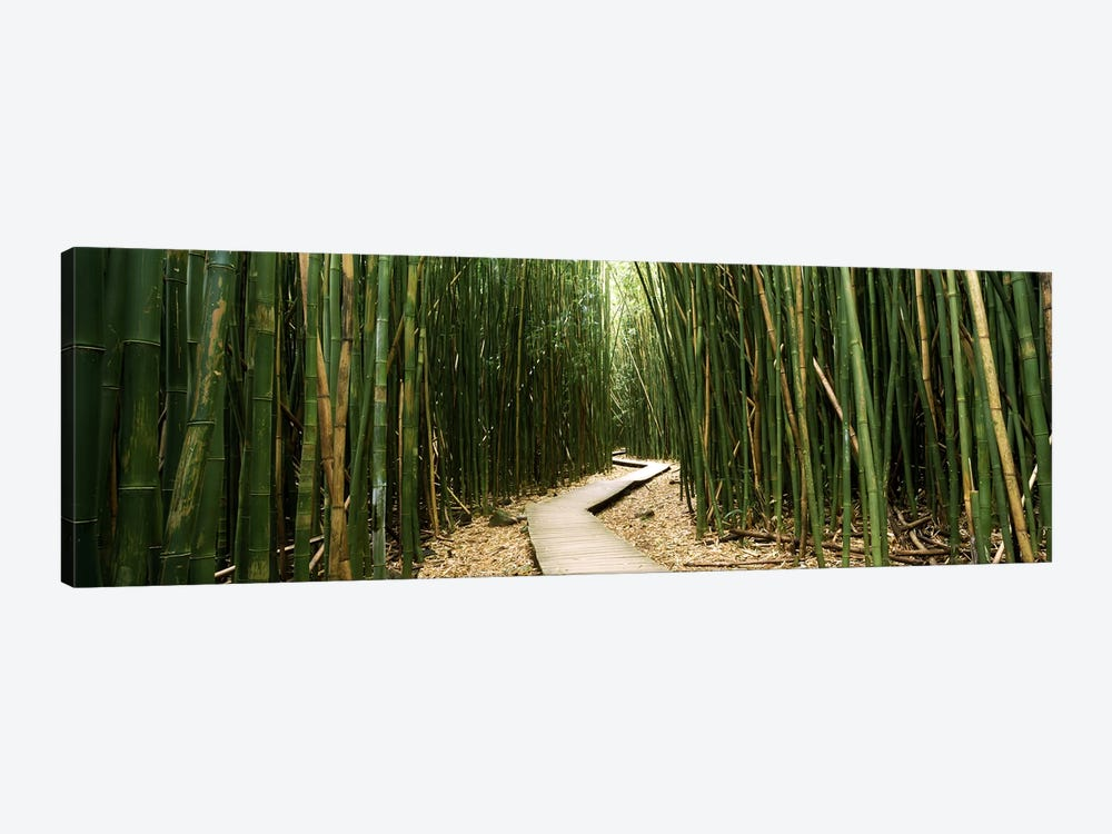 Bamboo Forest, Ohe'o Gulch, Haleakala National Park, Hana, Maui, Hawaii, USA by Panoramic Images 1-piece Canvas Artwork