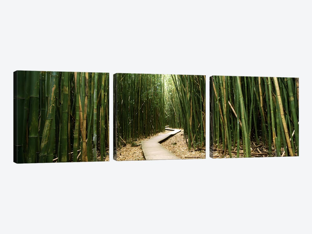 Bamboo Forest, Ohe'o Gulch, Haleakala National Park, Hana, Maui, Hawaii, USA by Panoramic Images 3-piece Canvas Art