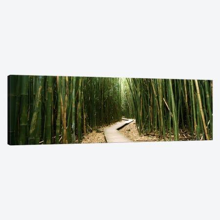 Bamboo Forest, Ohe'o Gulch, Haleakala National Park, Hana, Maui, Hawaii, USA Canvas Print #PIM9572} by Panoramic Images Canvas Wall Art