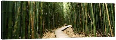 Bamboo Forest, Ohe'o Gulch, Haleakala National Park, Hana, Maui, Hawaii, USA Canvas Art Print