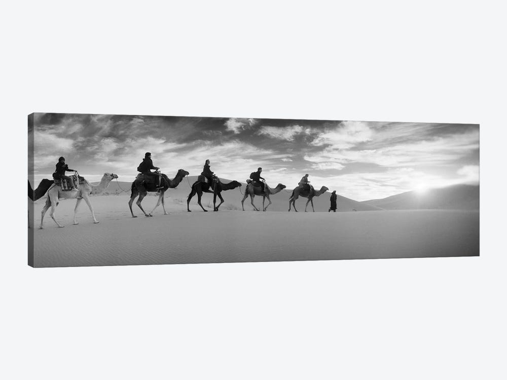 Tourists riding camels through the Sahara Desert landscape led by a Berber man, Morocco by Panoramic Images 1-piece Canvas Art