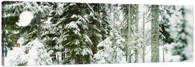 Snow covered evergreen trees at Stevens Pass, Washington State, USA Canvas Print #PIM9596