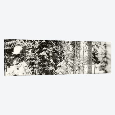 Snow covered evergreen trees at Stevens PassWashington State, USA Canvas Print #PIM9597} by Panoramic Images Canvas Art Print