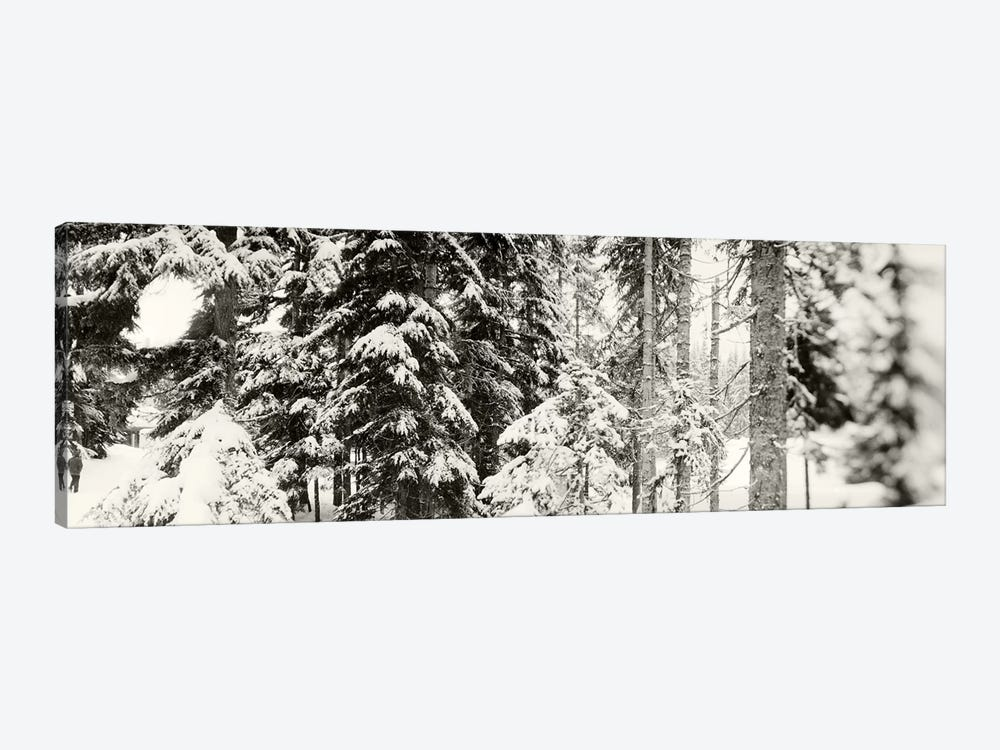 Snow covered evergreen trees at Stevens PassWashington State, USA by Panoramic Images 1-piece Art Print