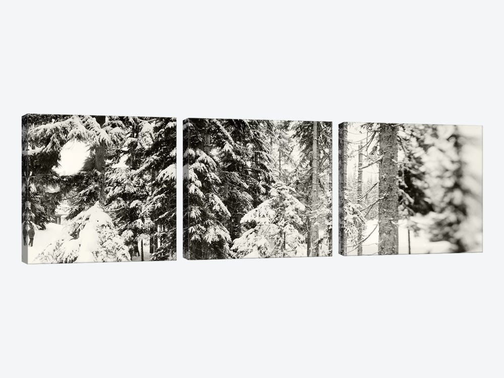Snow covered evergreen trees at Stevens PassWashington State, USA by Panoramic Images 3-piece Canvas Print