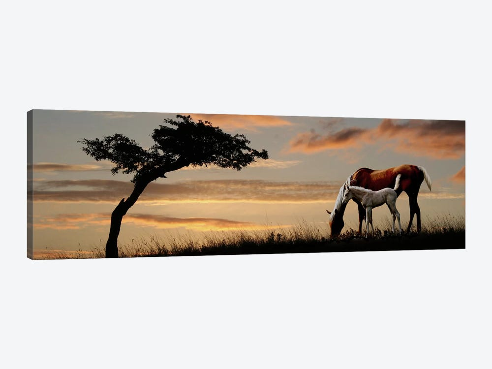 Horse mare and a foal grazing by tree at sunset by Panoramic Images 1-piece Canvas Artwork
