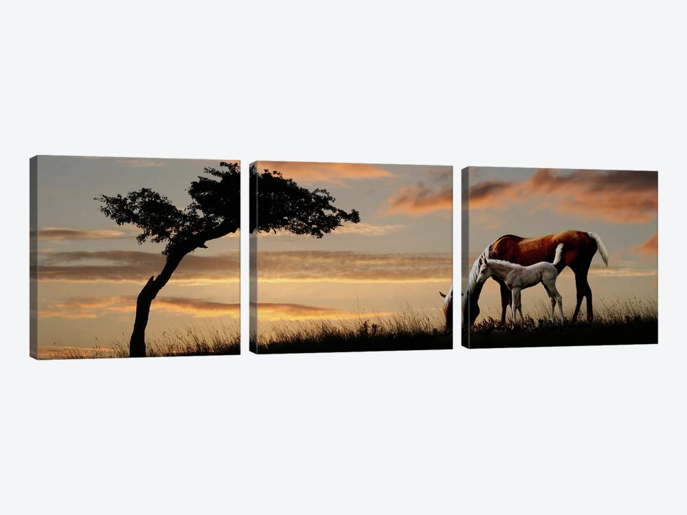Horse mare and a foal grazing by tree at sunset by Panoramic Images 3-piece Canvas Art