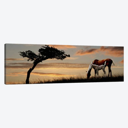 Horse mare and a foal grazing by tree at sunset Canvas Print #PIM9598} by Panoramic Images Canvas Wall Art