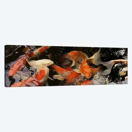 Koi carp Canvas Print #PIM9606} by Panoramic Images Canvas Art Print
