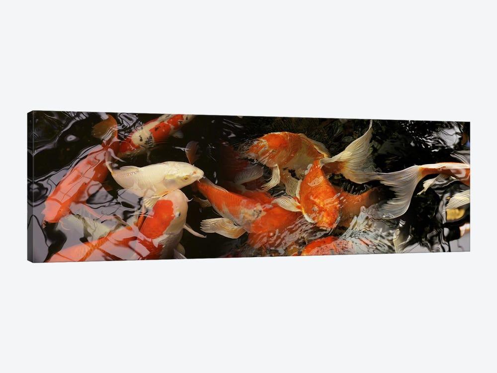 Koi carp by Panoramic Images 1-piece Canvas Art Print