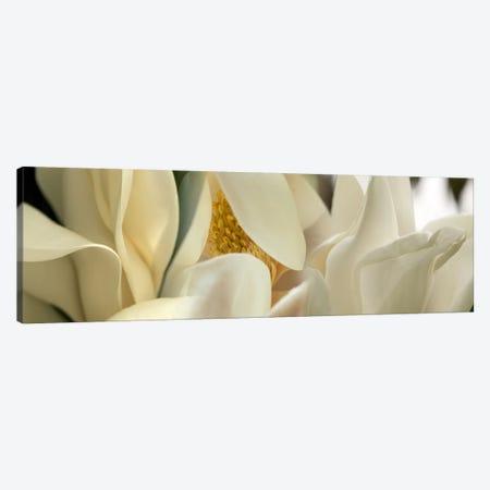 Magnolia flowers #2 Canvas Print #PIM9609} by Panoramic Images Canvas Artwork