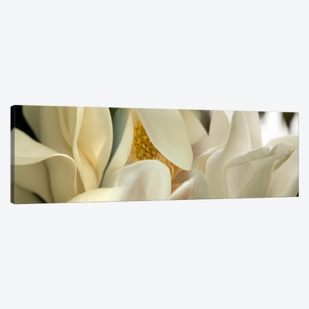 Magnolia flowers #2 Canvas Print #PIM9609} by Panoramic Images Canvas Artwork