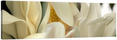 Magnolia flowers #2 Canvas Art Print