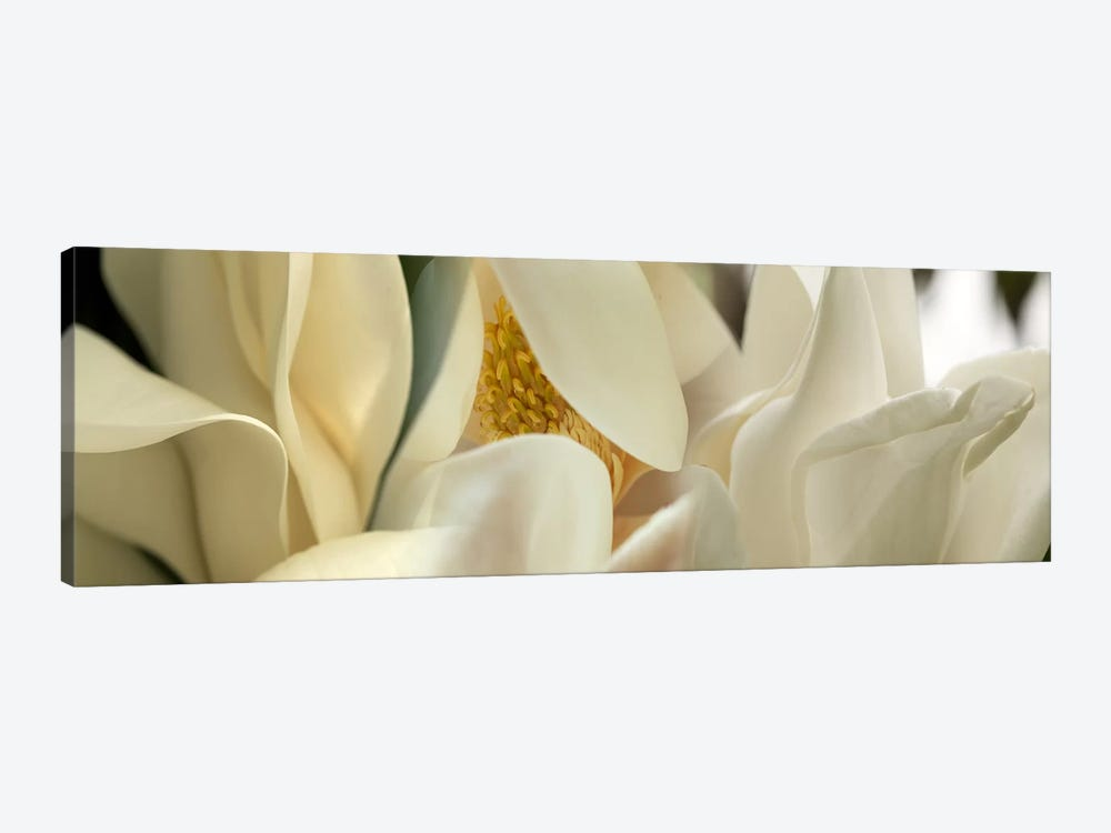 Magnolia flowers #2 by Panoramic Images 1-piece Canvas Art