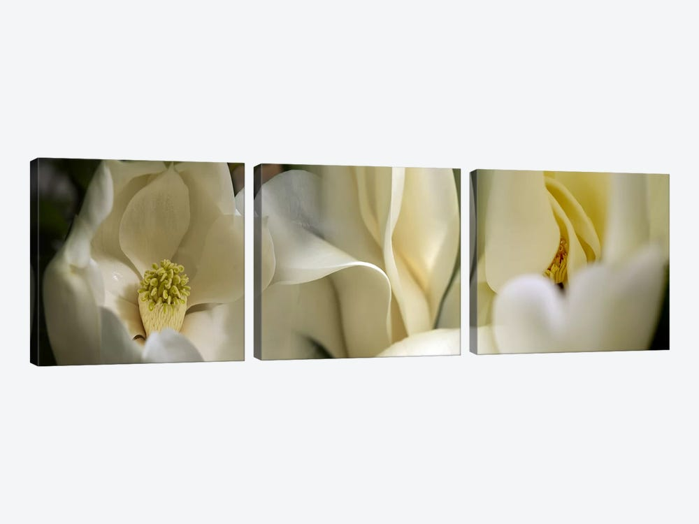 Magnolia flowers #3 by Panoramic Images 3-piece Canvas Art