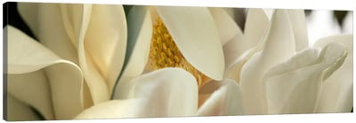 Magnolia flowers #4 Canvas Art Print