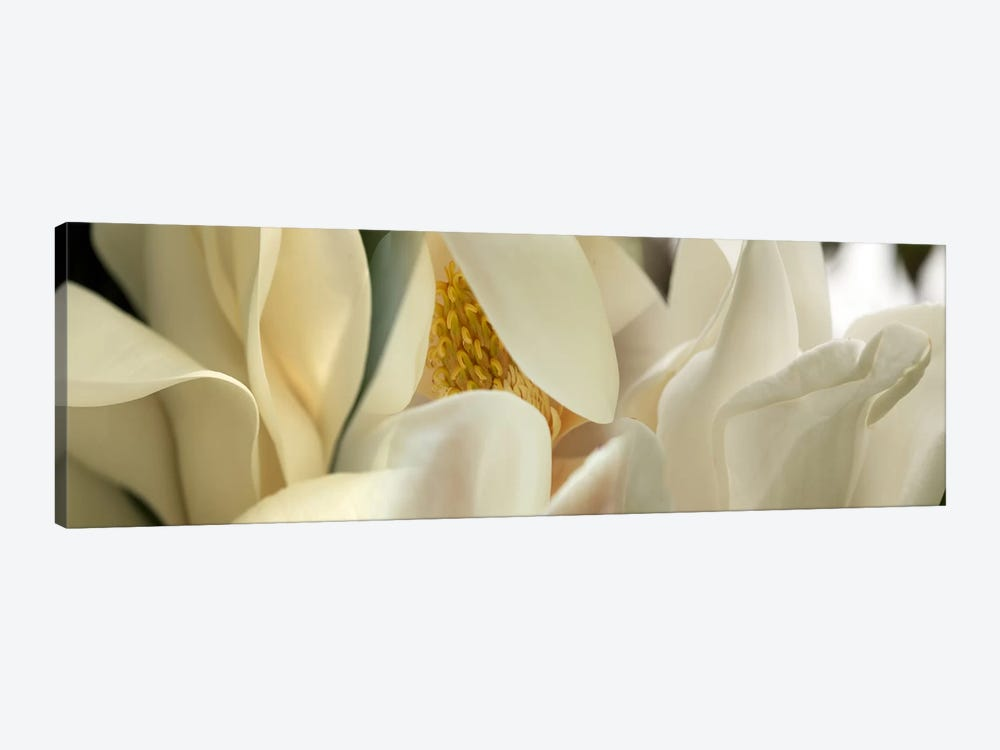 Magnolia flowers #4 1-piece Art Print