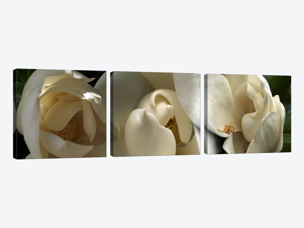 Magnolia flowers #5 by Panoramic Images 3-piece Canvas Artwork