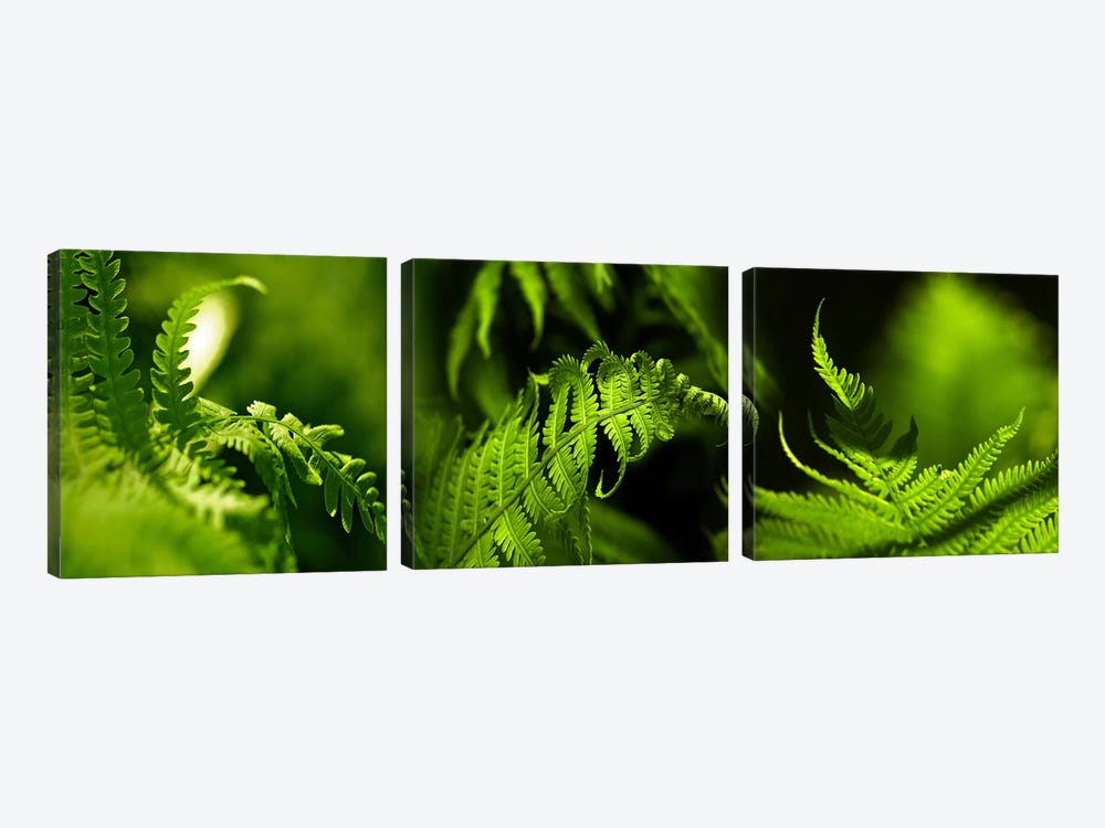 Fern by Panoramic Images 3-piece Art Print