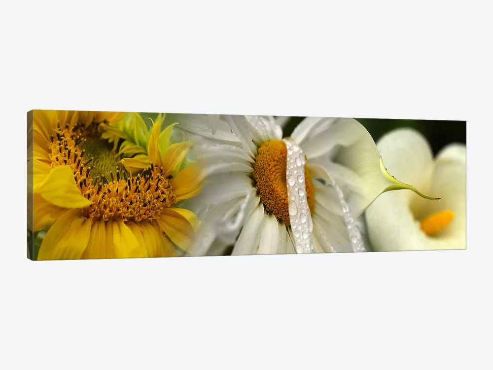 Yellow and white flowers by Panoramic Images 1-piece Canvas Wall Art