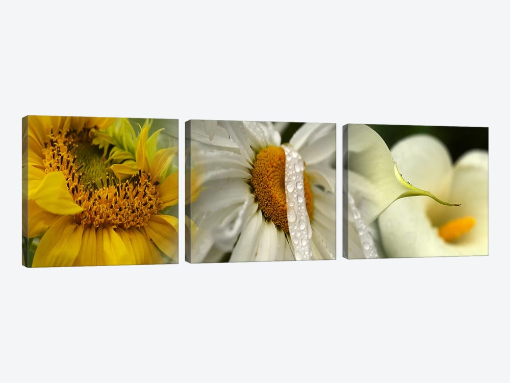 Yellow and white flowers by Panoramic Images 3-piece Canvas Artwork