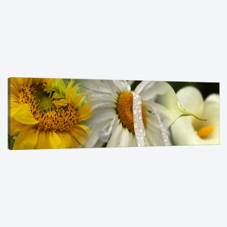 Yellow and white flowers Canvas Print #PIM9614} by Panoramic Images Canvas Artwork