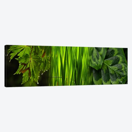Close-up of leaves Canvas Print #PIM9615} by Panoramic Images Canvas Art